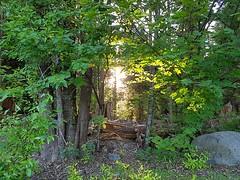 The setting sun through the trees