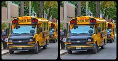 School bus parade 3-D / CrossEye / Stereoscopy / HDRaw
