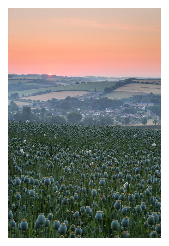 Opium Sunrise