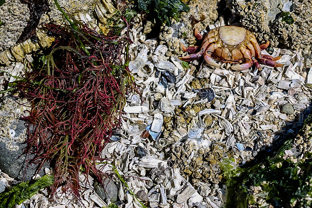 Sea Weed and Crab Exoskeleton