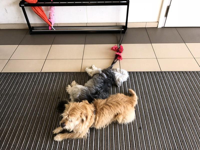 Dogs waiting at supermarket entrance