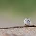 Small Hurdles