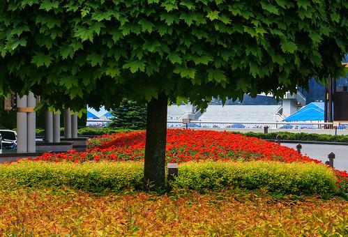 sonyalpha sonya6000 sony a6000 ilce6000 mirrorless flowers geraniums tree leaves water