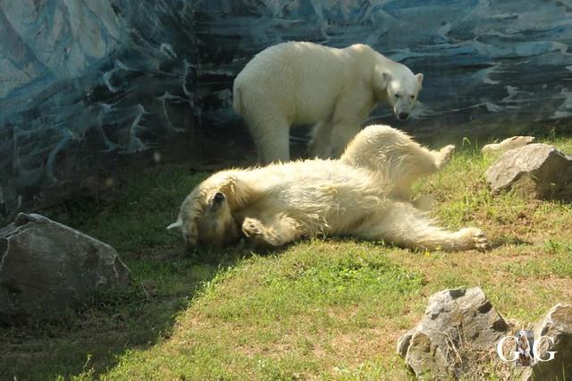 Besuch Zoo Sosto 20.06.+21.06.2018118