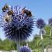 Bee Frenzy:    191/365
