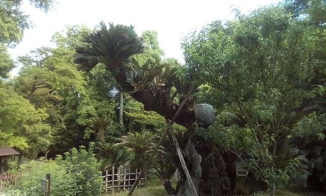 Sukkeien Garden, Hiroshima