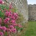 IMG_3939 - Portchester Castle - Hampshire - 17.06.18