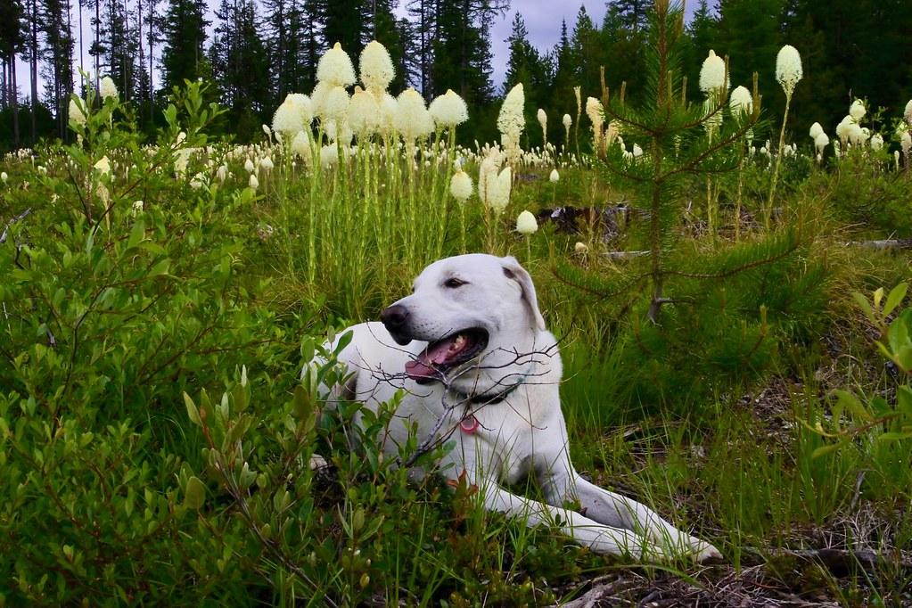 Bear Grass & Buster