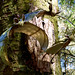 Barley, Aitken Wood - Pendle Sculpture Park., bats (2)