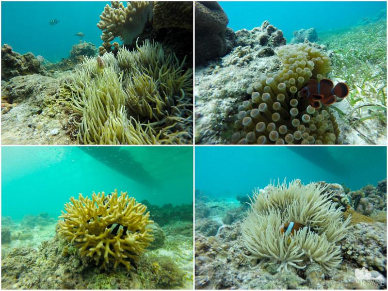 Cute reef fish