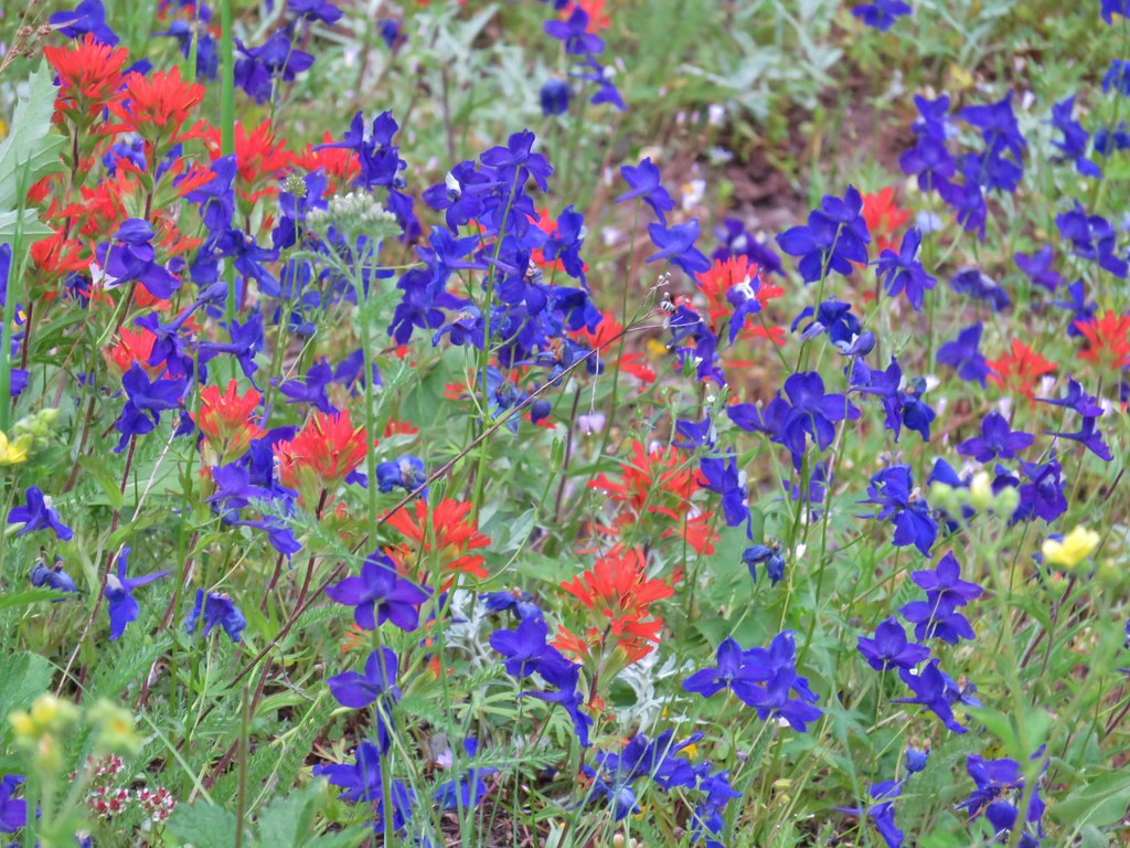 Larkspur and paintbrush