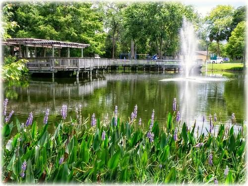 pondatmagnoliapark southdaytonaflorida pond scenic landscape water fountain dock pergola flowers nature