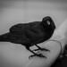 The Lone Murder by Ryan Saxton