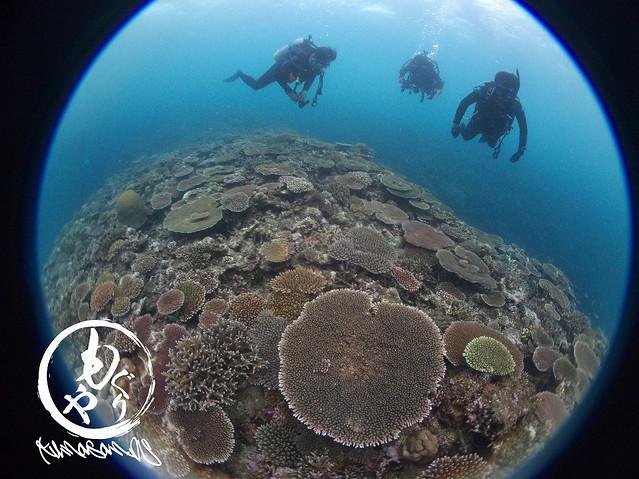 珊瑚もりもり