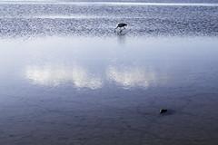 Salt Flats Atacama Desert Chile
