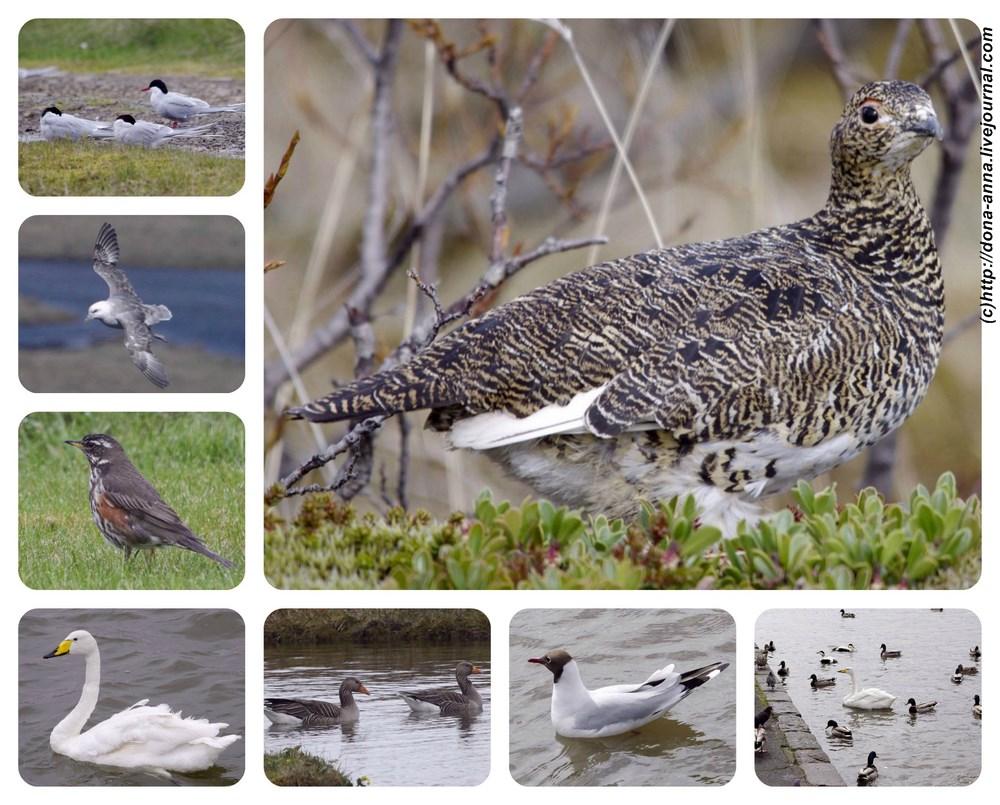 Birds-collage3-a