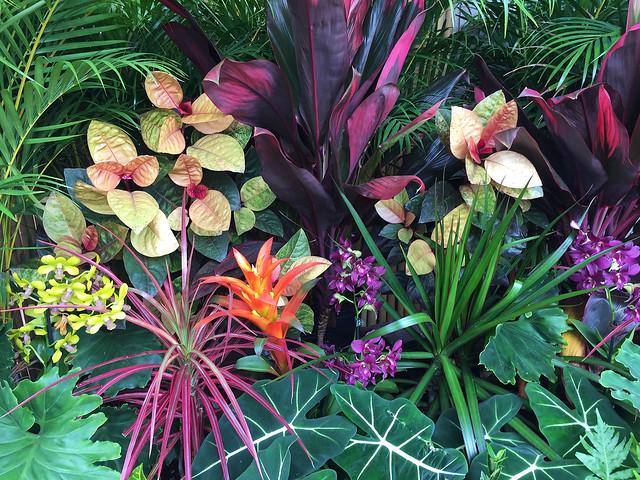 Tropical Hawaiian Flora
