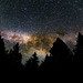 Milky Way rising over the trees