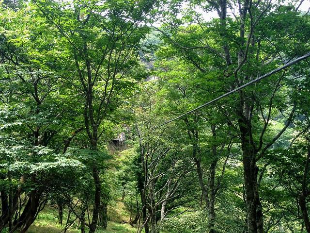 蓬莱山 琵琶湖バレイ ジップライン LINE4 Woodpecker(ウッドペッカー)