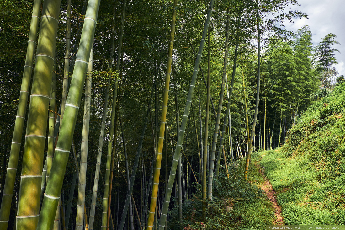 Bamboo grass on a sunny day