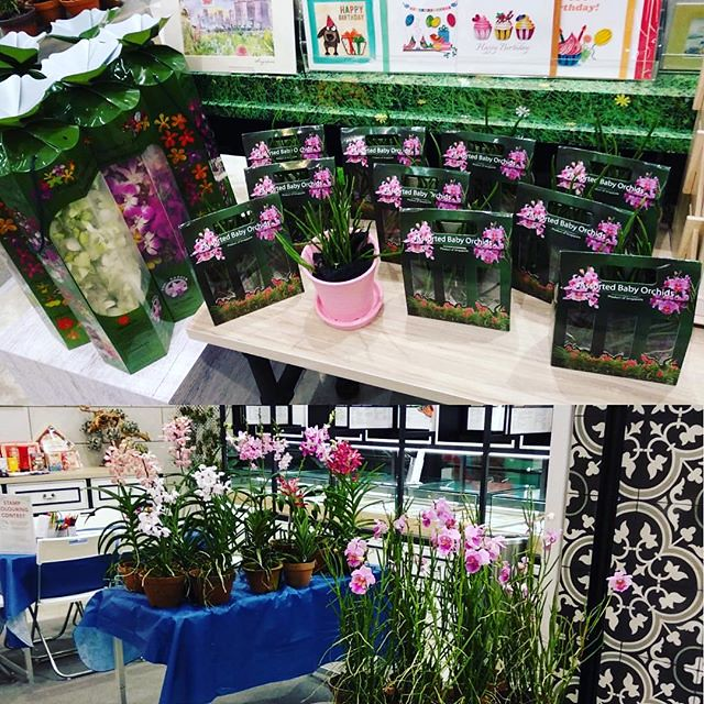 SingPost launches stamps to commemorate 125 years of the Vanda Miss Joaquim @singpostcentre - Do support our popup at SingPost Philatelic Store! Baby Joaquim hybrids, Potted and Fresh Cut orchids available!  #tohgarden #singpost #singapore #farm #orchid #