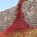 Carlisle Castle Poppies:weeping window