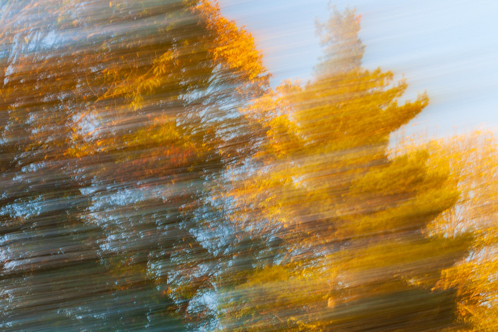 Fall colors, motion blur