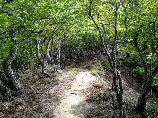 鎌ヶ岳 武平峠ルート 登山道