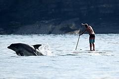 Dolphin Survey Trip 4th July 2018