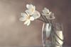 White Rain Lilies....