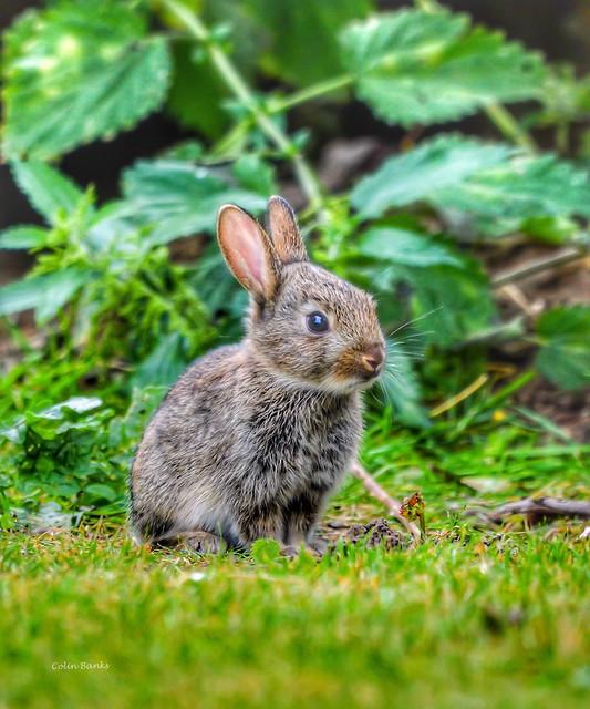 Wild Baby rabbit 🐰