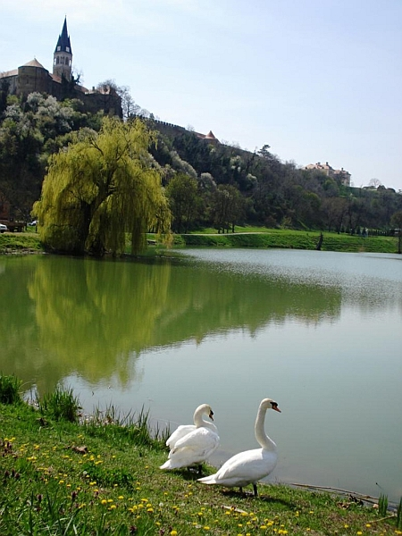 Pogled-s-Dunavca