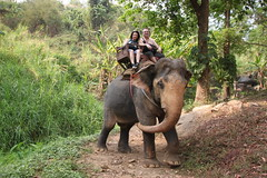 Thailand 2013 - 8.Tag, Chiang Mai, Elefantencamp