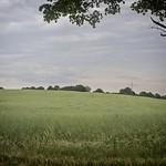 180616-135348 - Baum & Landschaft