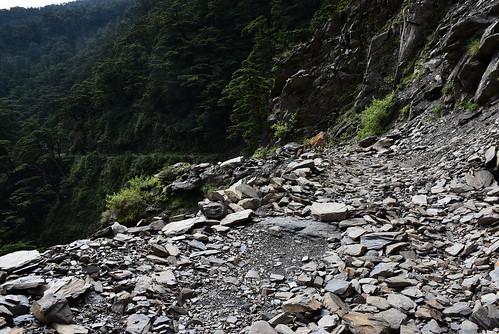 合歡溪步道-第一處崩塌