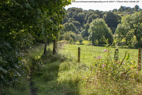 Field at Dixon Scar Woods, Sowerby Bridge