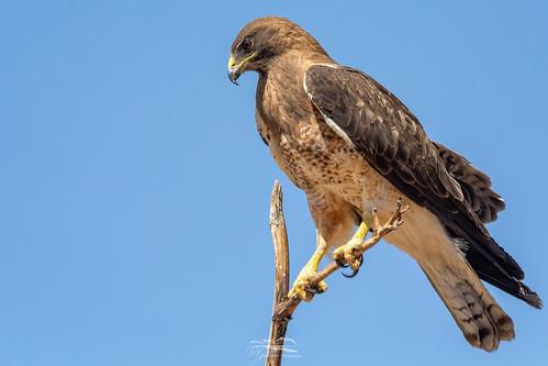 arizona birding hereford nature wildlife birds unitedstates us