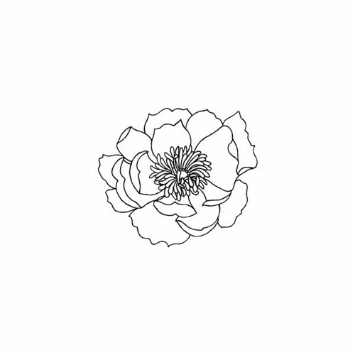 Flowers Drawings : Danny