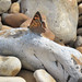 Pebbles on the Beach by Perseus1
