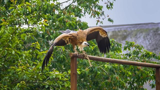 eagle - 5358