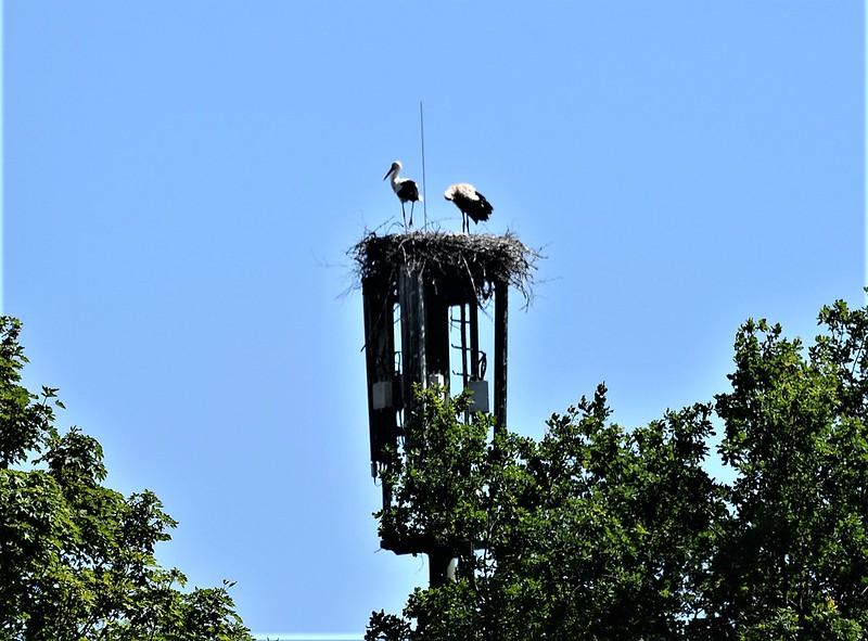 Stork 25.06 (3)