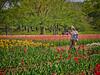Photo:チューリップの花園で XI By jun560