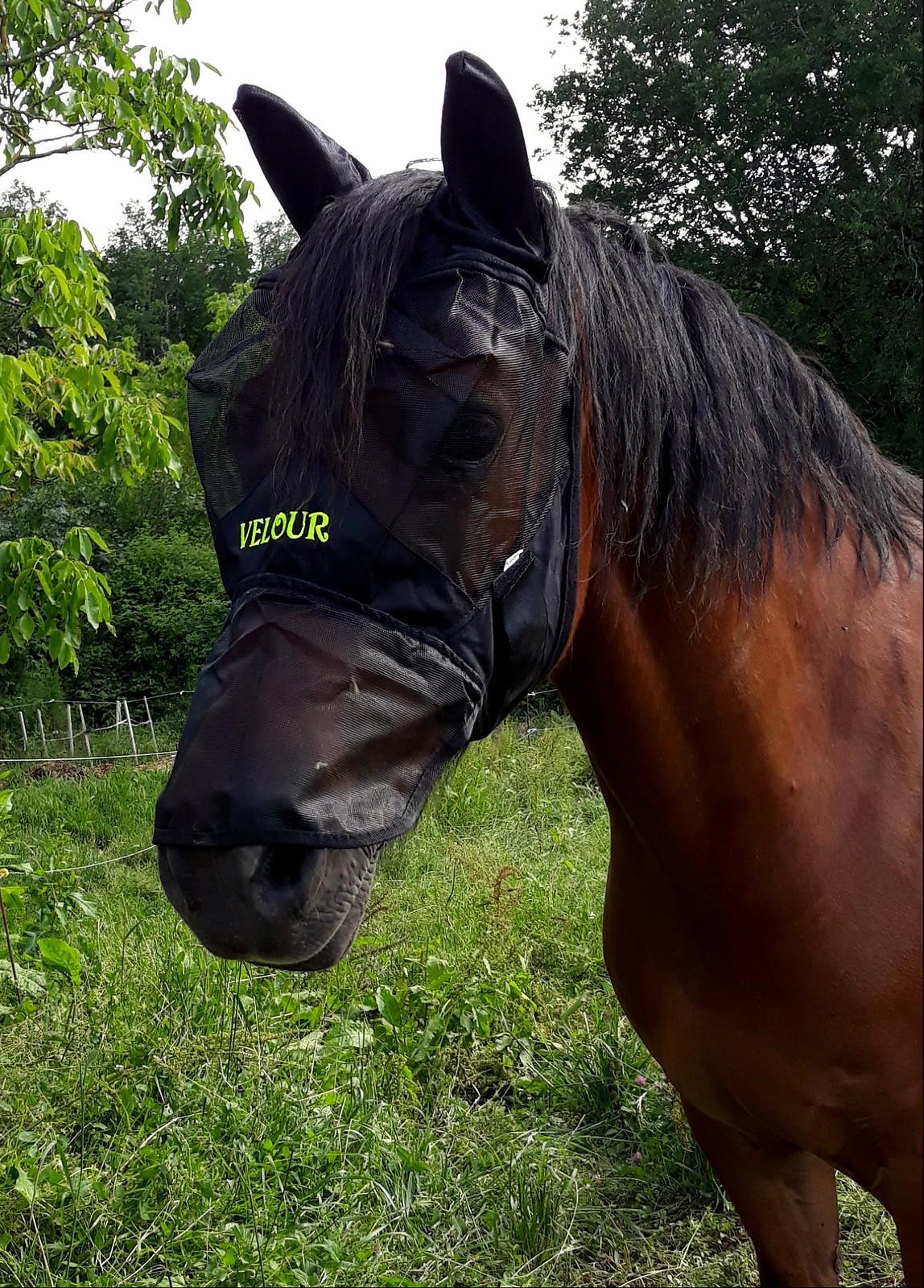 Masque anti-mouche personnalisé pour cheval