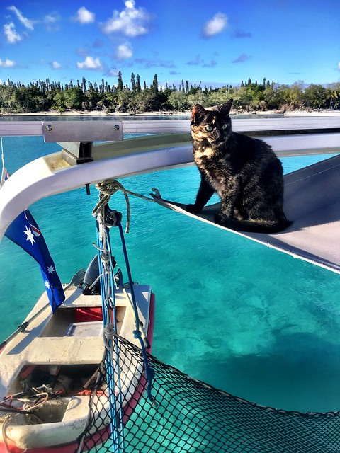 Honey the BoatCat. Moro. New Caledonia.