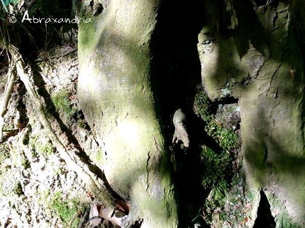 sommerwald2