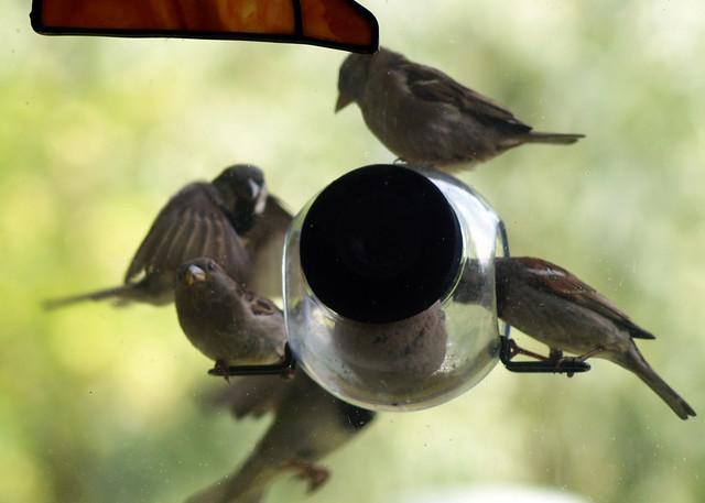 birdfeederC03809