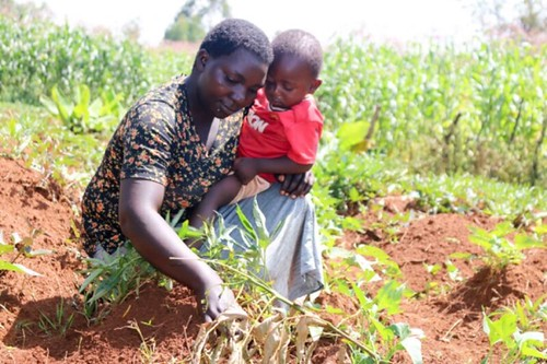 Teresa Nekesa with her youngest child in her OFSP plot.