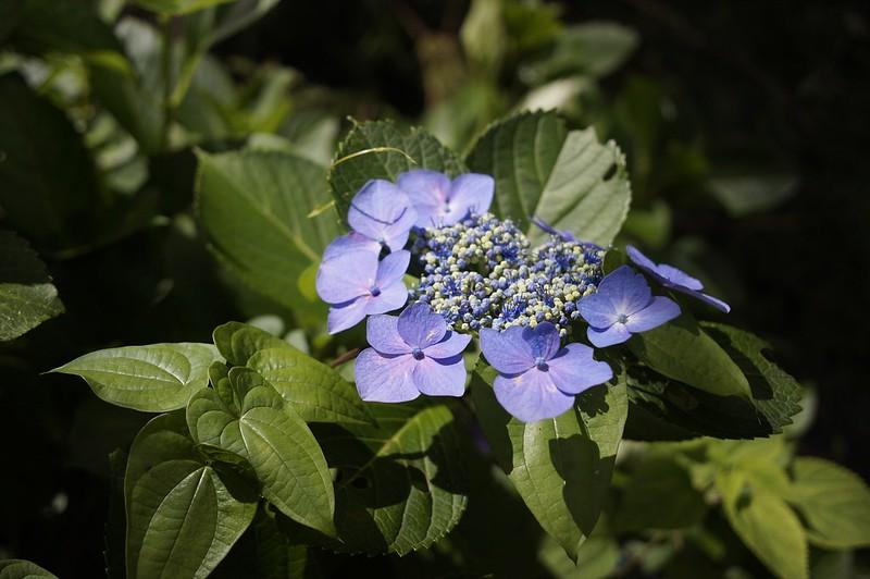 Hydrangea and Rudbekia