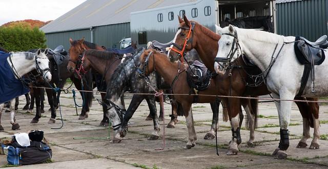 Midland Hunt Landhorst 2015-9131
