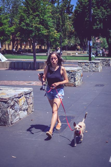 Running Dog, Fujifilm X-T20, XF35mmF1.4 R